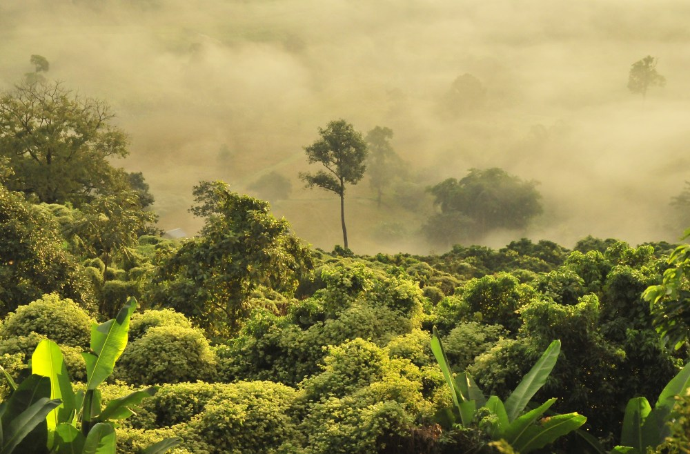 Tropical rainforests represent the oldest major vegetation type still present on the terrestrial earth. Tropical Forest Pictures Download Free Images On Unsplash