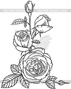 Цветы и бутоны роз - черно-белый векторный клипарт