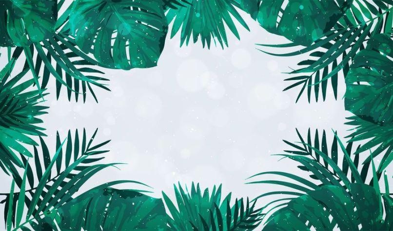 Palm Tree Photo Frame Frameswalls