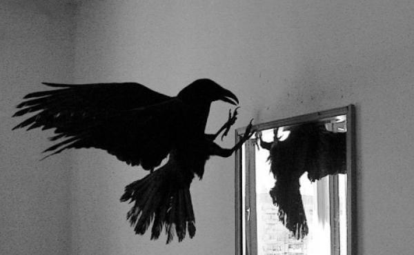 Ворона и Зеркало