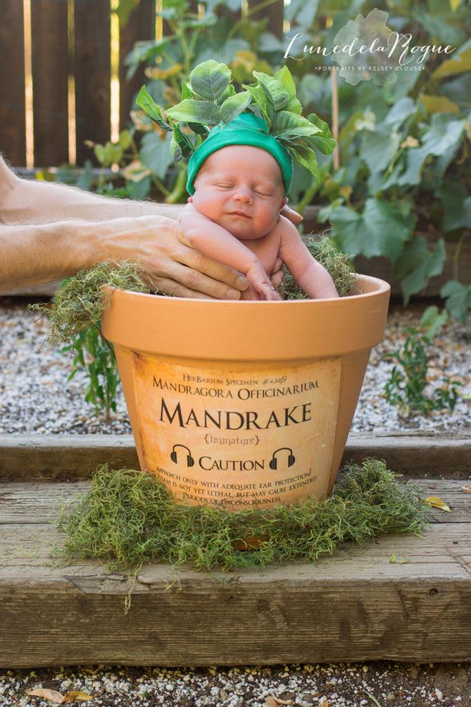 Jesse eKatherine Oldfield resolveram fazer um ensaio newborn do filho Theodore baseado emHarry Potter e a Câmara Secreta
