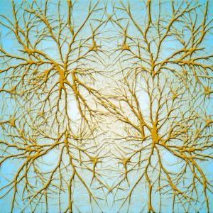 Wenn der Mensch altert, altert auch sein Gehirn. Die mentale Leistungsfähigkeit nimmt ab und Erkrankungen häufen sich. Ein möglicher Grund dafür ist die zunehmende Einlagerung von Eisen in den Nervenzellen.