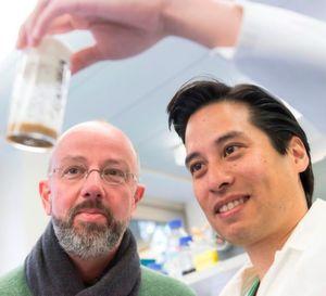 Das Bonner Forscherteam: Prof. Dr. Jörg Höhfeld (l.) und sein Mitarbeiter Riga Tawo vom Institut für Zellbiologie der Universität Bonn. In dem Behälter sind Fruchtfliegen. Wird der Abbauweg für den Insulinrezeptor ausgeschaltet, dann leben die Fliegen kürzer.