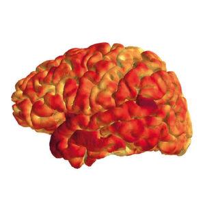 Die Dicke der menschlichen Hirnrinde korreliert mit dem epigenetischen Profil immunrelevanter Gene.