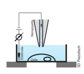 Der erste Schritt der Nanoinjektion: Die Nanopipette wird ca. 20µm über der Zelle manuell positioniert.