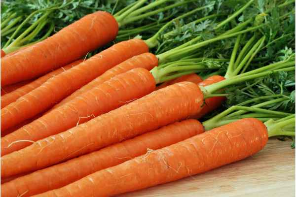 Carrots Allergies in Dogs Symptoms Causes Diagnosis