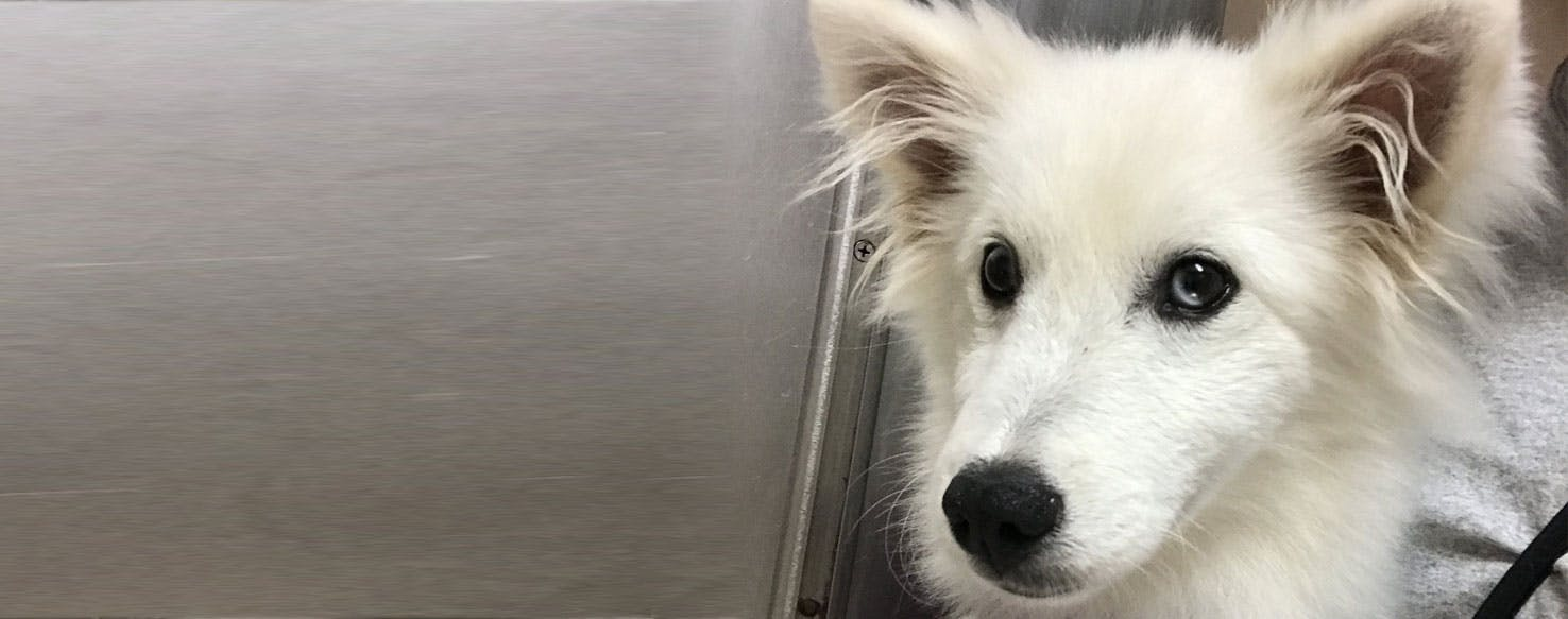 Puppies Breed Free Mix