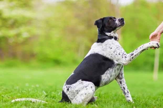 dog raising paw