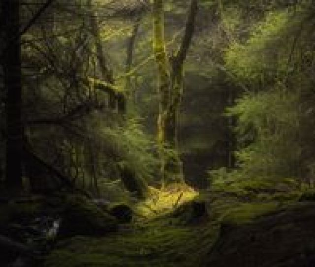 Forest Wallpapers Backgrounds Images X Best Forest Desktop Wallpaper Sort Wallpapers By Ratings