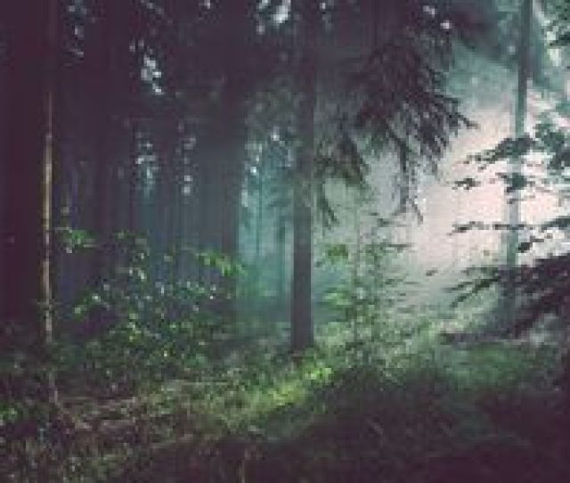 Preview Wallpaper Forest Trees Fog
