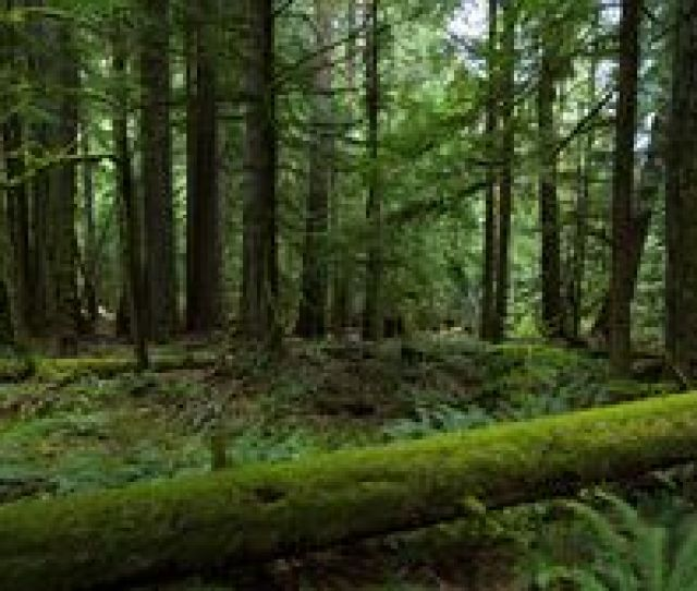 Preview Wallpaper Forest Trees Nature