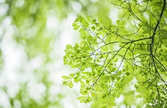 florais para combater stress: Elm