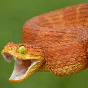 Oroscopo sciamanico: serpente