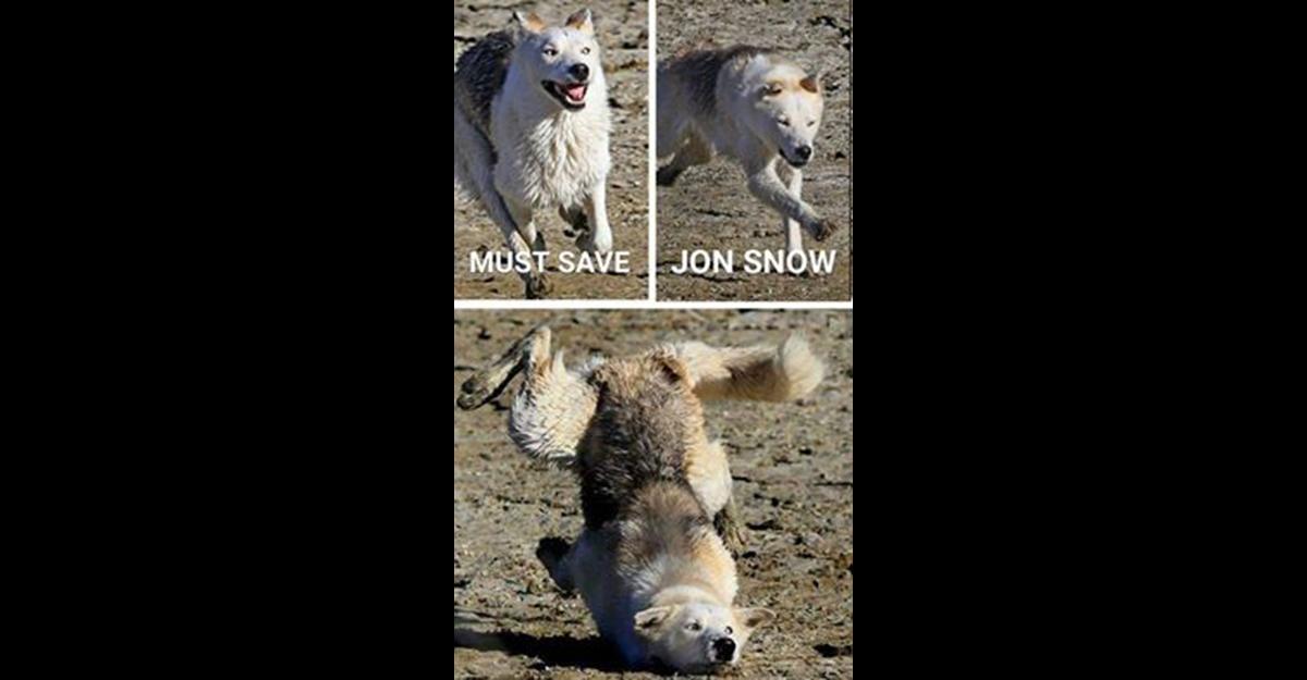 Le Gif E I Meme Della Sesta Stagione Di Game Of Thrones Wired