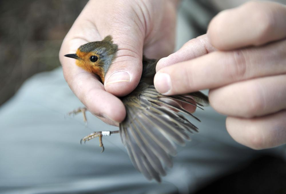 What Is A Wildlife Biologist? (with Pictures