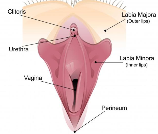 Sexual Arousal Can Cause The Clitoris To Become Enlarged