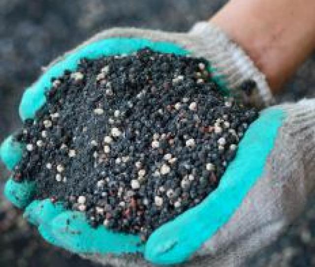 Ammonium Nitrate Fertilizer Is Commonly Sold In Granular Form