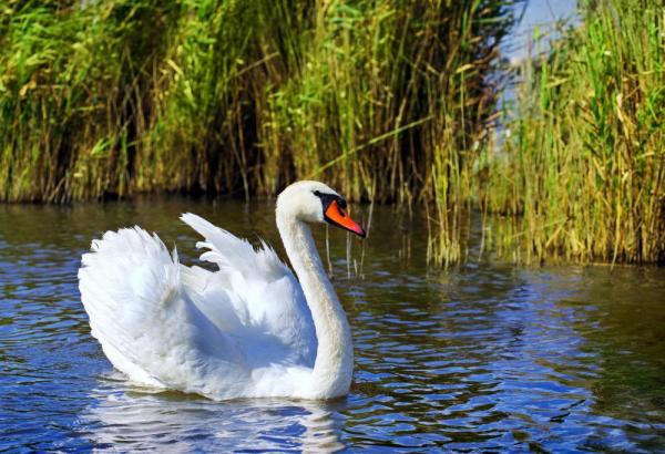 MONTESSORI GEOGRAPHY : Biomes - Wetlands ~ Pinegreenwoods