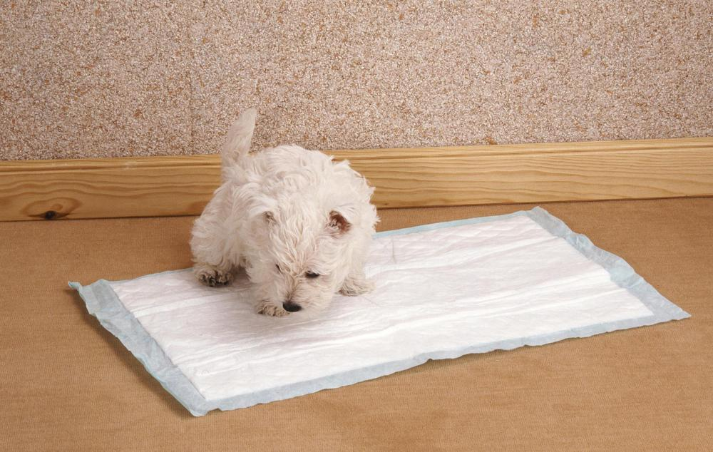 Image result for dogs on pee pads
