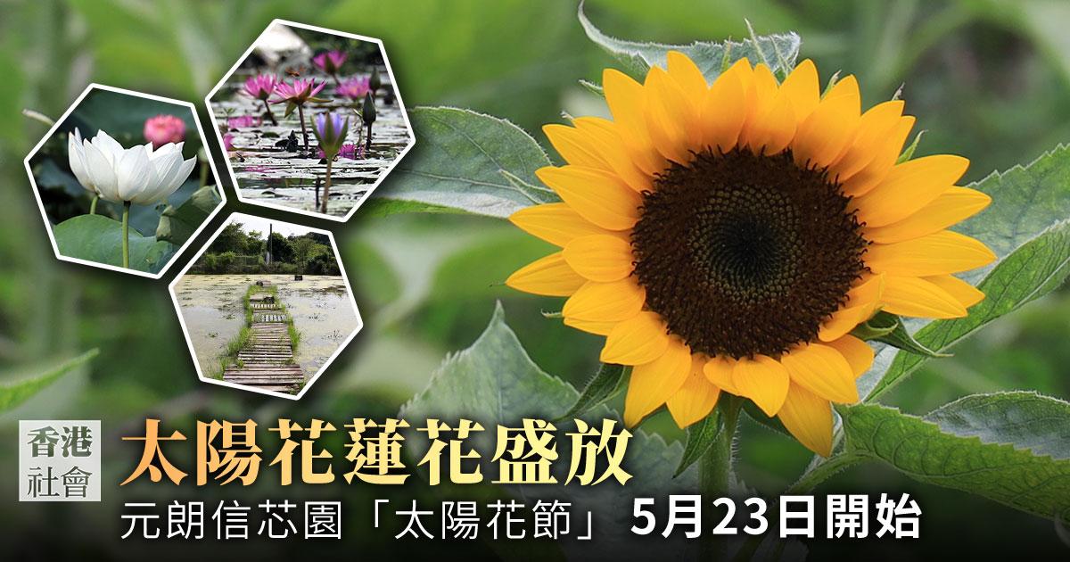 元朗信芯園太陽花蓮花盛開 迎接自由之夏|大紀元時報 香港|獨立敢言的良心媒體
