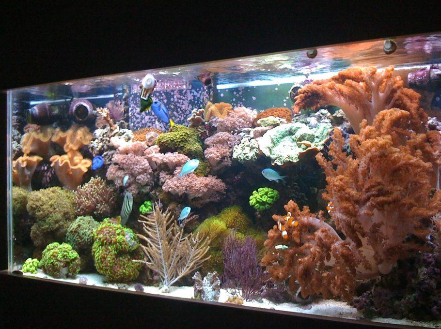 Aquarium Plants Ontario
