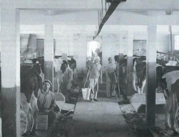 Работа в коровнике, 1939 год. Фотоиллюстрация