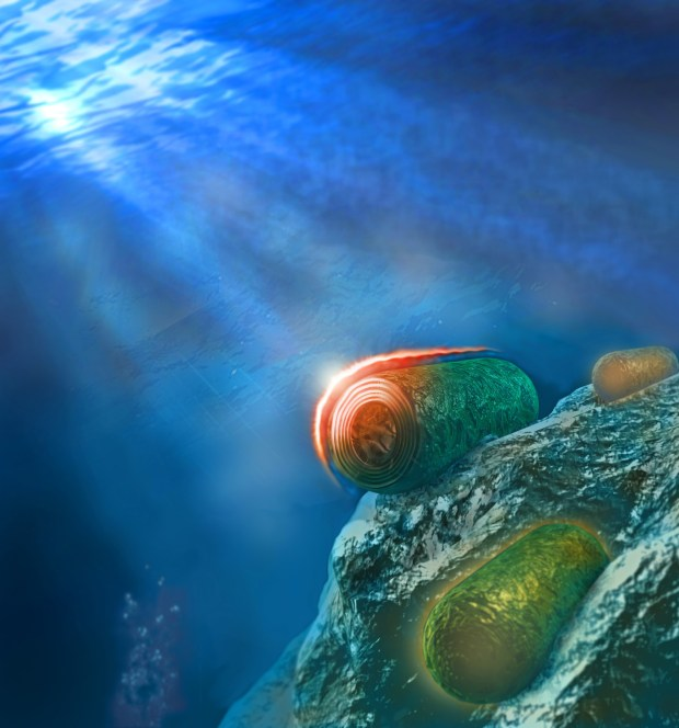 Цианобактерии. Иллюстрация: пресс-служба Техниона