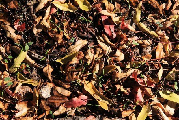 Листопад в лесу Цора. Фото: Яаков Школьник