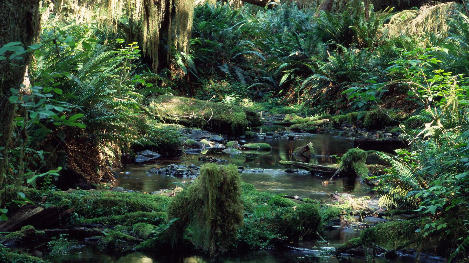 Backgrounds Rain Forest Tropical