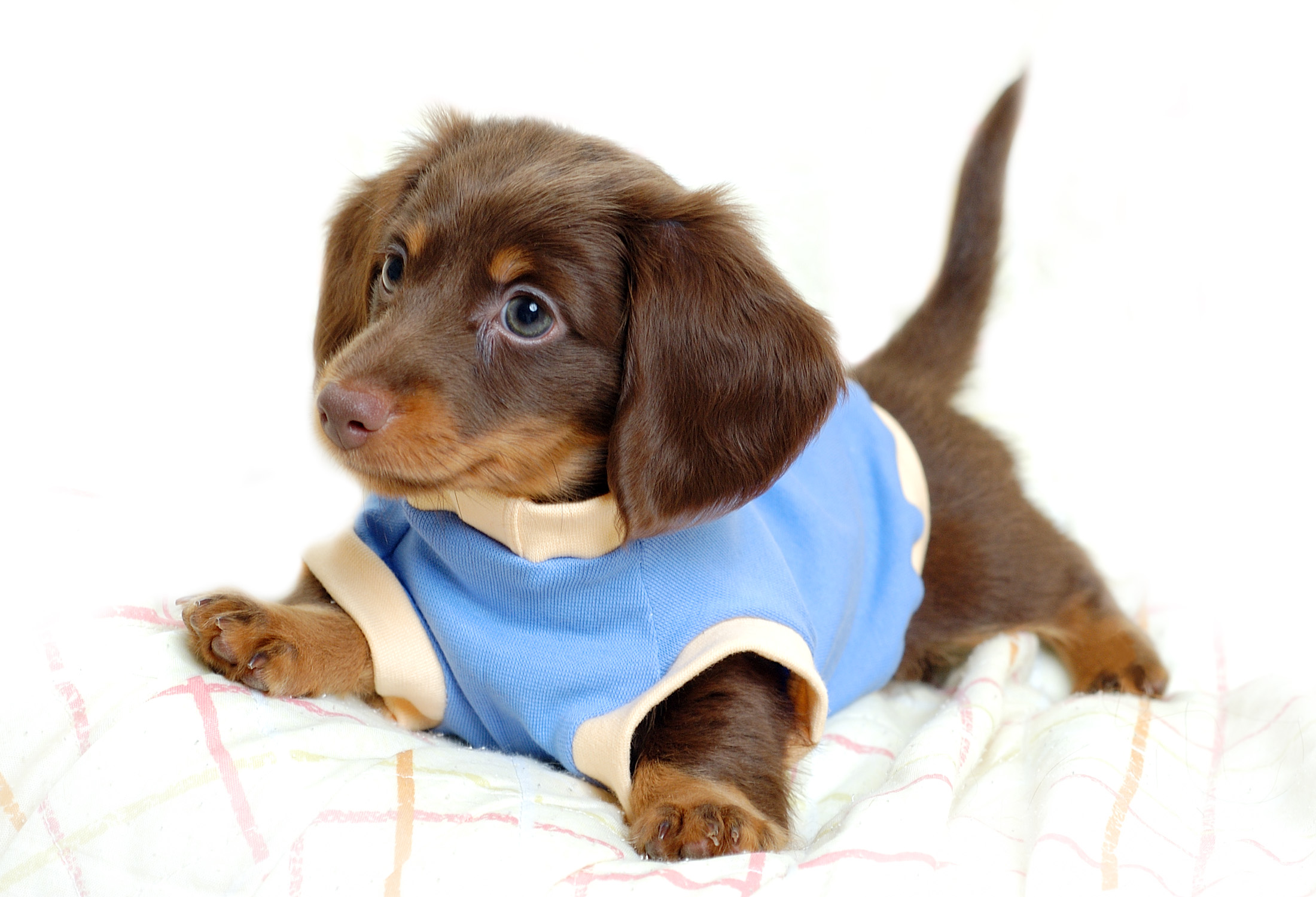 930 Puppy HD Wallpapers   Background Images   Wallpaper Abyss HD Wallpaper   Background Image ID 59930