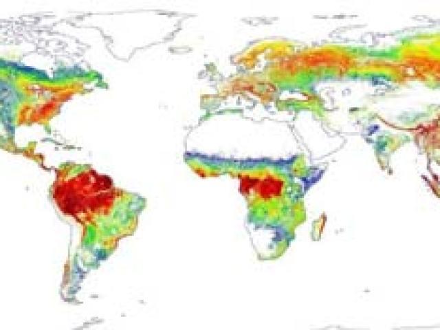 Le foreste sono più alteLa prima mappa globale