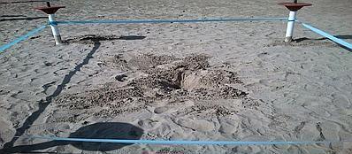 Il nido delle tartarughe rare, specie «Caretta Caretta