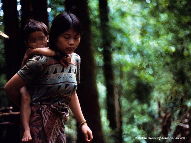 Dagli anni Settanta le terre dei Penan sono state spianate, bruciate e rase al ruolo da disboscamenti su vasta scala, piantagioni di olio di palma, gasdotti e dighe (Joanna Eede ? www.survival.it)