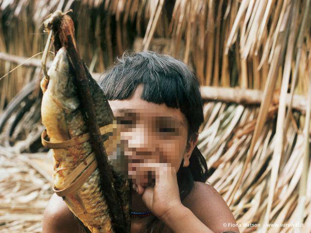 Gli Enawene Nawe del Brasile sono una delle pochissime tribù al mondo a non mangiare carni rosse. Pescano utilizzando dighe di tronchi e nasse di giunco (a cura di Joanna Eede ? www.survival.it)
