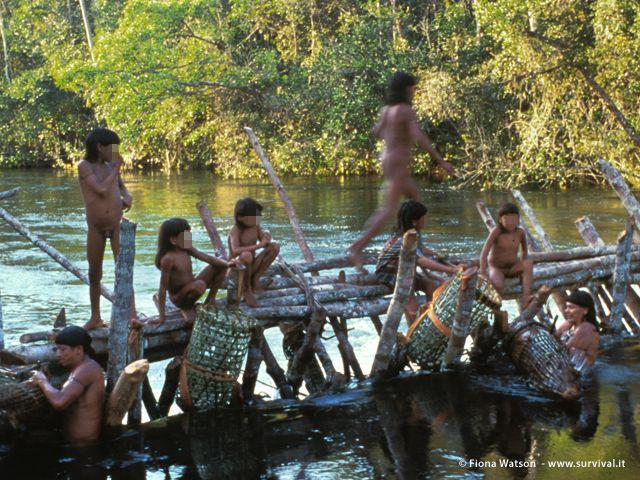 Le tecniche di pesca degli Enawene Nawe fanno parte di un sofisticato rituale chiamato Yãkwa, riconosciuto come patrimonio culturale dal governo brasiliano (Joanna Eede?www.survival.it)