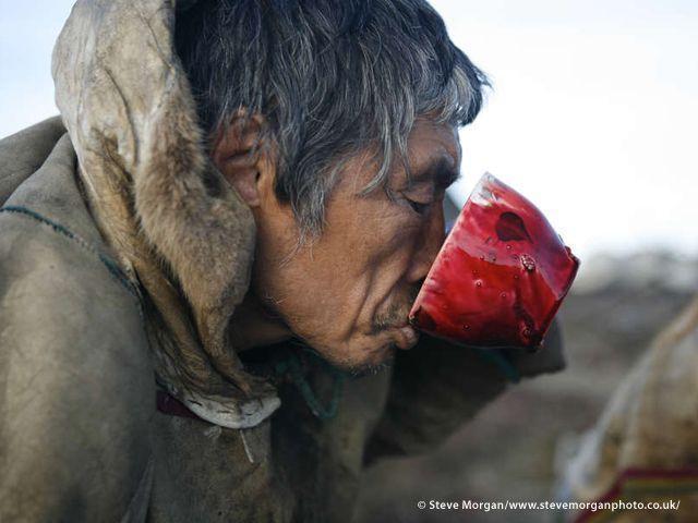 I Nenet mangiano carne di renna cruda, congelata oppure bollita, e ne bevono il sangue ricco di vitamine. Il latte di renna è sei volte più grasso di quello di mucca (Joanna Eede ? www.survival.it)