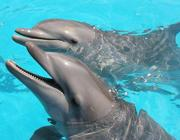 Delfini in un parco acquatico