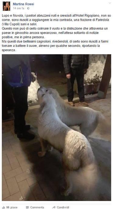Risultati immagini per salvi cani dell'Hotel Rigopiano
