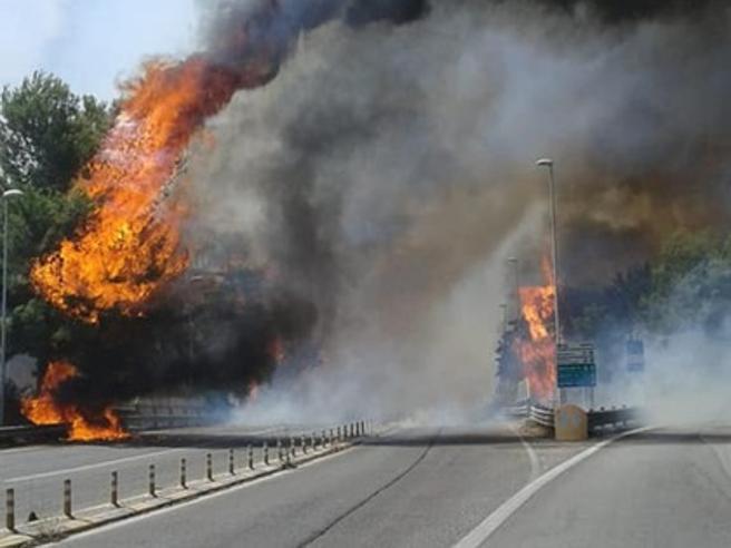 Pescara, maxi incendio distrugge la Riserva Dannunziana. A fuoco anche il Molise