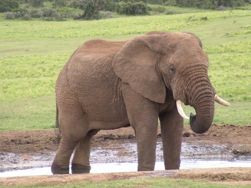 Animals wallpaper entitled Elephant