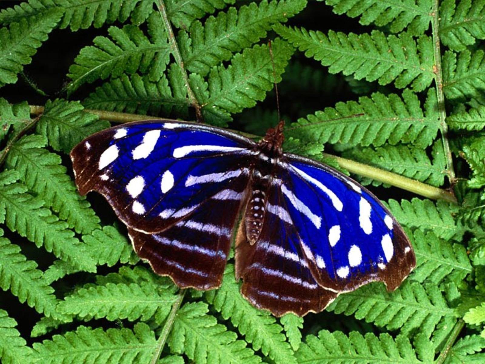Beautiful-Butterflies-butterflies-9481888-1600-1200.jpg