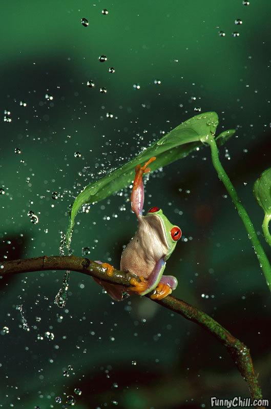 lonley froggy on a rainy day