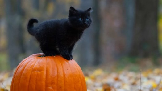 Risultati immagini per halloween