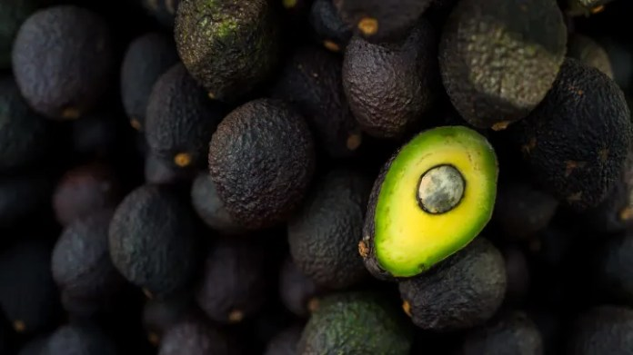 Avocado Industry In Colombia
