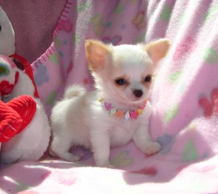myunclesbabydog.jpg - Isn't this puppy cute!!!!!