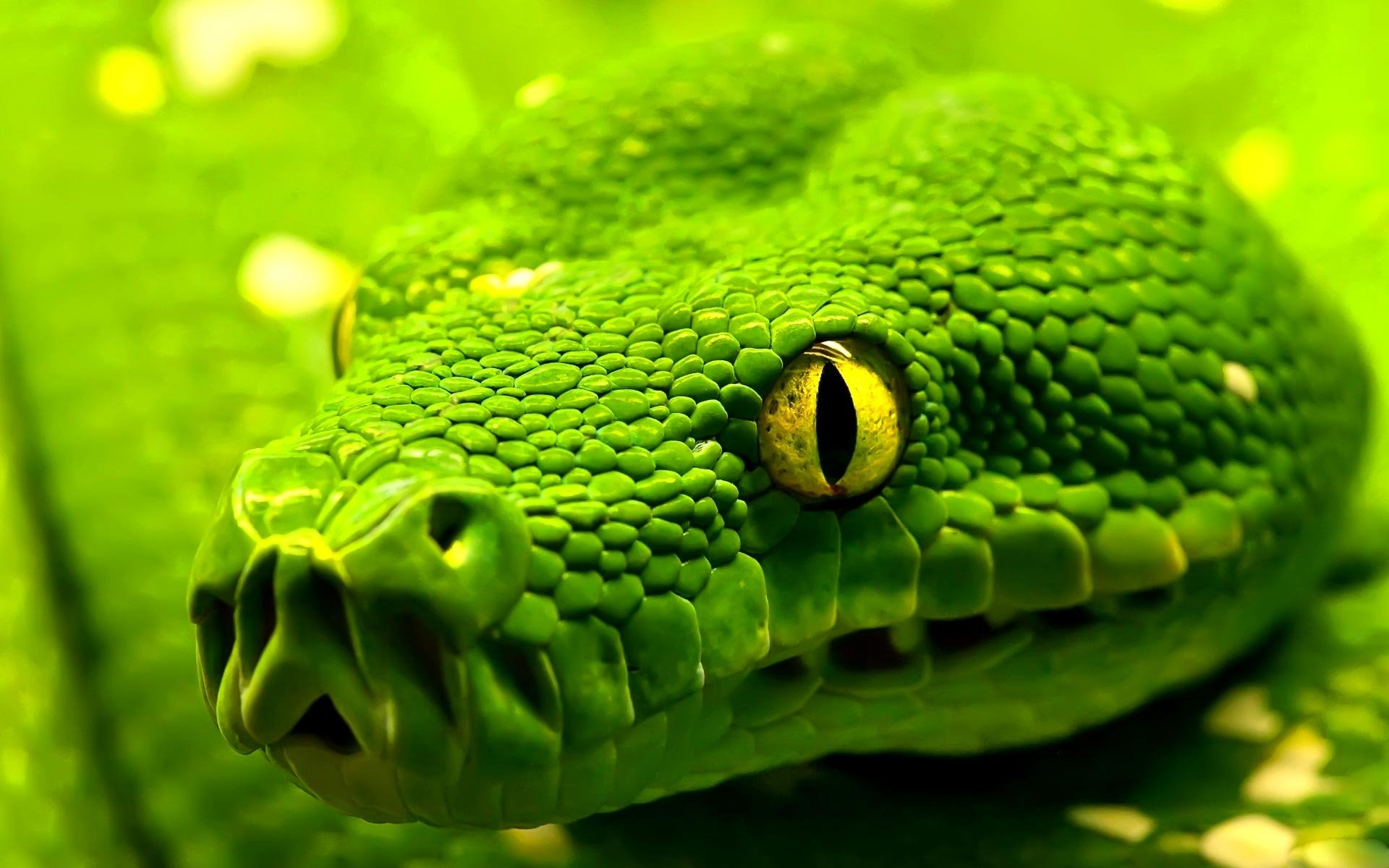 301 snake hd wallpapers | backgrounds - wallpaper abyss