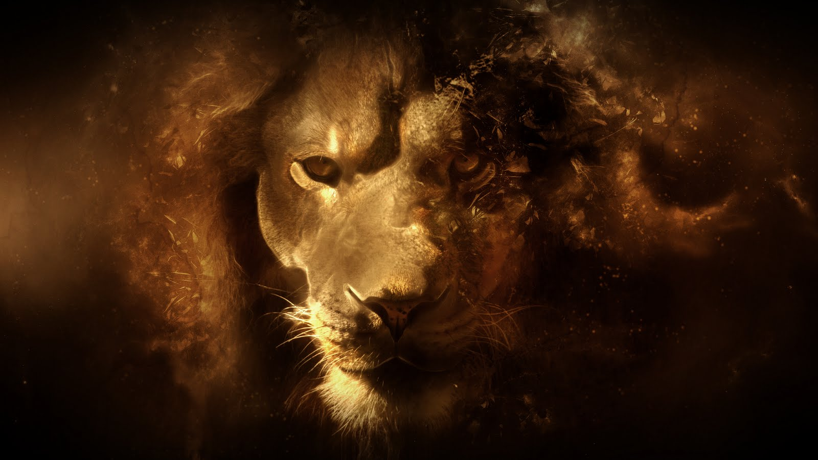 793 Lion HD Wallpapers   Backgrounds - Wallpaper Abyss
