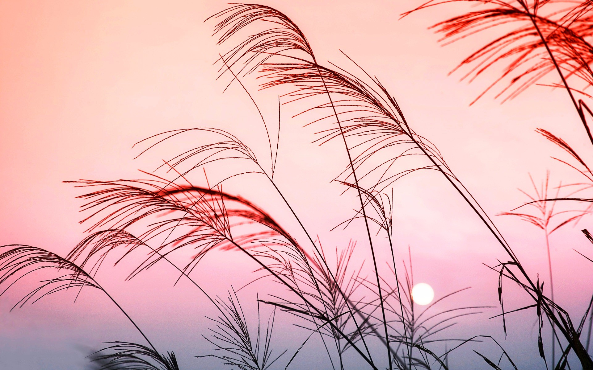 Hd wallpapers and background images. 247 Pastel HD Wallpapers | Background Images - Wallpaper ...