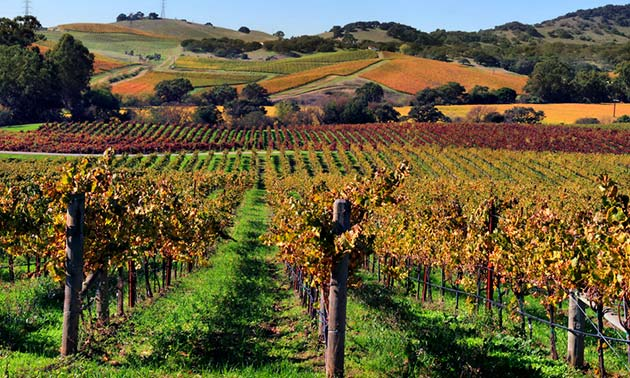 Napa Valley - Places to visit out west