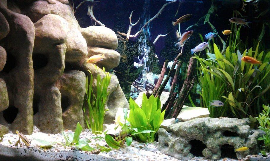 Most Beautiful Freshwater Tanks 2012